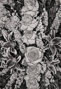 Mae Wertz - Flowers Abstract