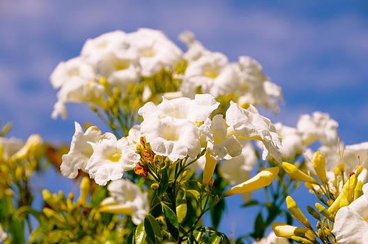 Flowers by Amanda Miles