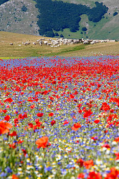 Flowers and cows by Andrea Bonavita