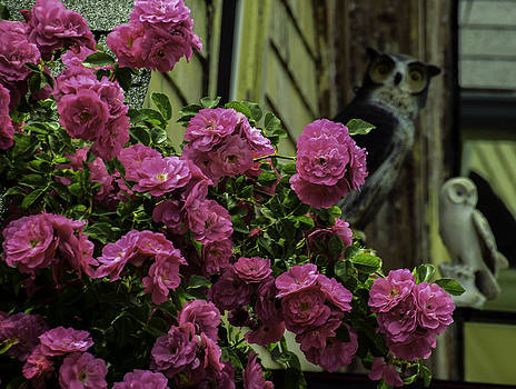 Flowers And Owls by Will Burlingham
