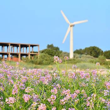 Gynt - Flowers and Wind turbine
