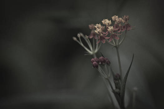 Flowers At Dusk by Bradley R Youngberg