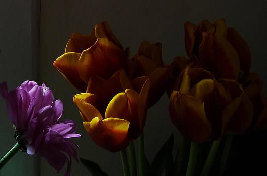 Baato   - flowers by gentle light