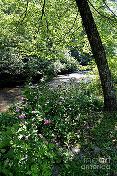Flowers by the Creek by Eva Thomas