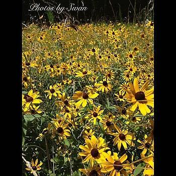 #flowers #flower #tagsforlikes #petal by Plus Size