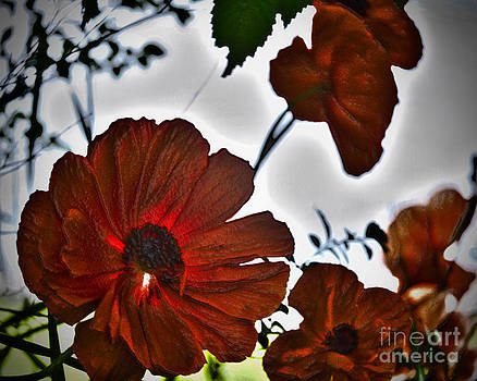 Flowers by Fred L Gardner