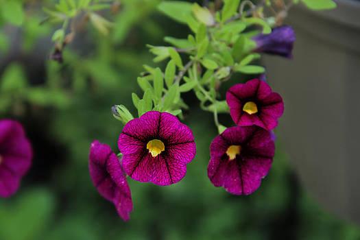 Flowers by George Ferreira