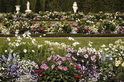 Flowers by Gouzel -