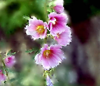 Flowers Hollyhocks by Ethel Rossi