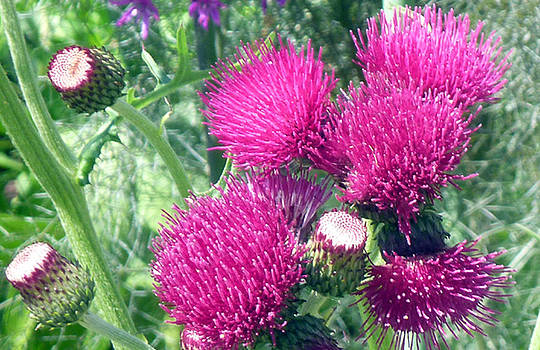Flowers III by Mark L Watson