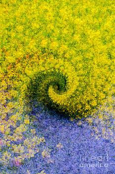 Rod Wiens - Flowers in a Swirl