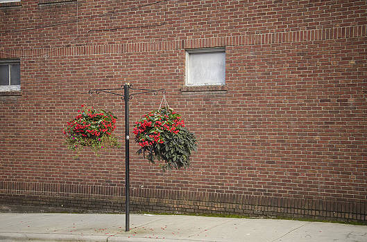 Flowers in Downtown Hendersonville NC by Wesley Corn by Wesley Corn