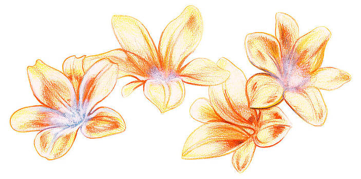 Flowers in Freedom by Ismaele Alongi