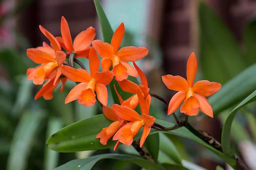 Flowers In Greenhouse  by Ed Hernandez