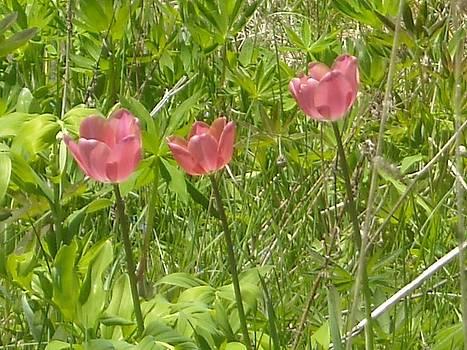 Flowers in the Field by Liz Lare