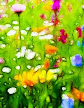 Steve K - Flowers in the Garden
