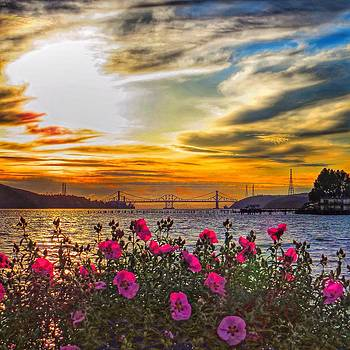 Flowers in the Sun by Brian Maloney
