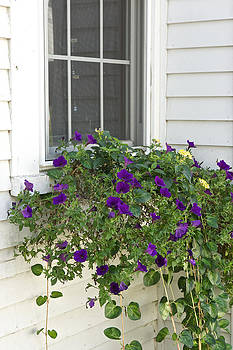 Flowers in windowbox by Gail Maloney