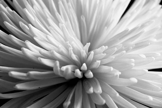 Flowers by Jose Mena