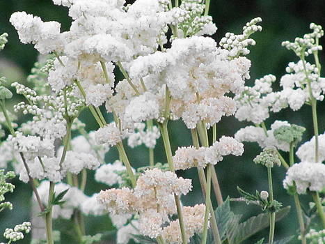 Flowers Like Snow by Sandra Martin