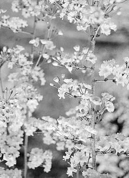 Flowers by Melissa Schumacher