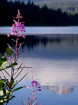 Qing Yang - Flowers near Trillium Lake