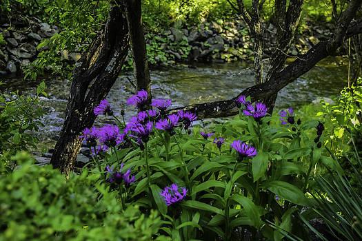 Flowers Nova Scotia by Will Burlingham
