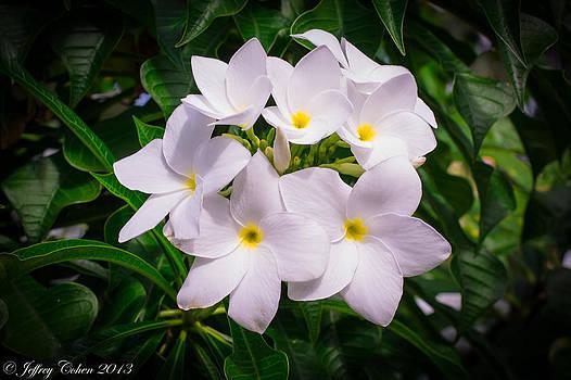 Flowers of Bermuda by Jeffrey Cohen