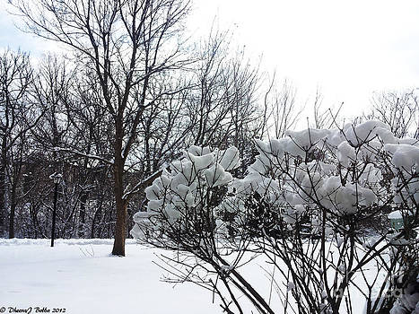 Flowers of Snow by Dheeraj B