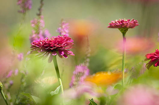 Flowers of the garden by Chad Davis