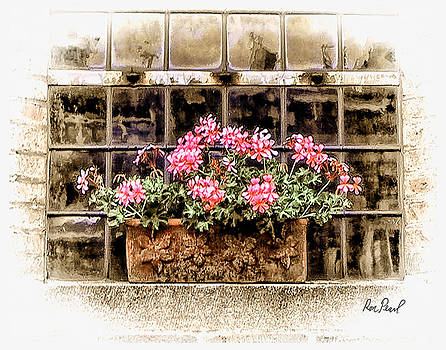 Flowers on a Ledge by Ron Pearl