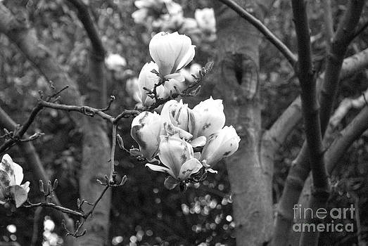 Pravine Chester - Flowers on a Tree
