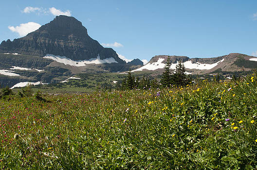 Flowers on Logan Pass by Bruce Gourley