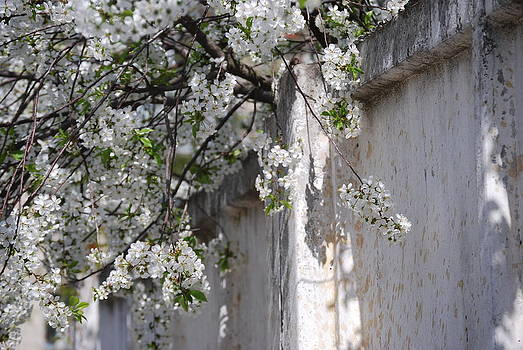 Flowers over the Wall by Steven Liveoak