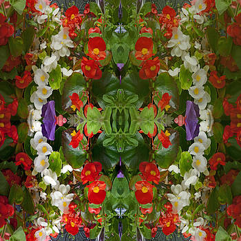 Flowers Reflect by Robert Gipson
