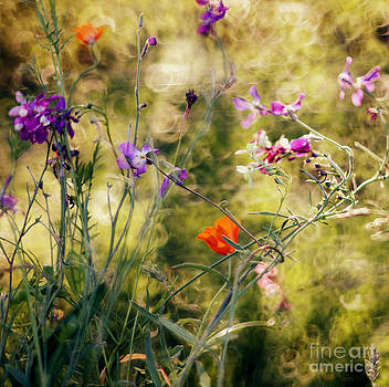 Flowers by Sylvia Lakoma