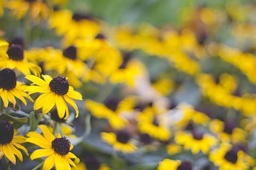 Flowers to remember by Alejandra Pinango