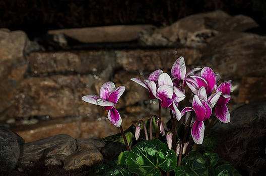 Flowers With Waterfall Backdrop by Len Romanick
