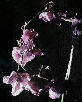 Flowers01 by George  Leininger