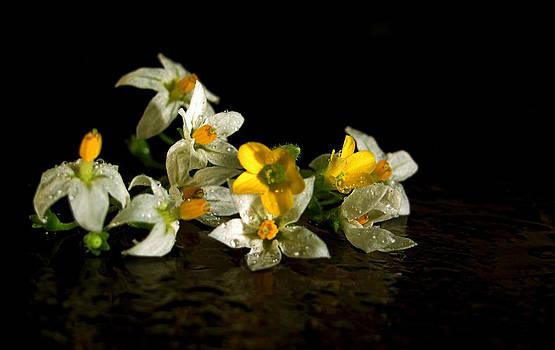 Flowers1 by Preet Chakraborty