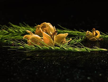 Flowers2 by Preet Chakraborty