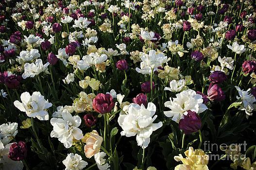 Flowery by Audrey Wilkie