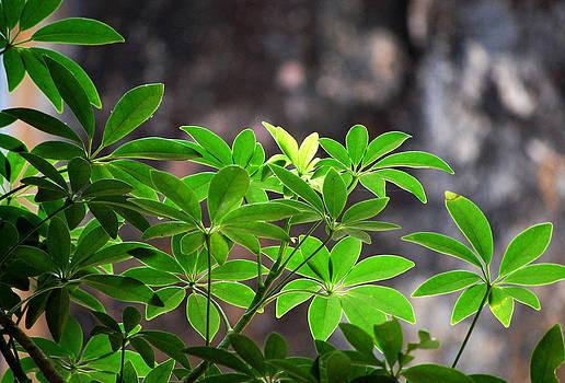 Flowery Leaf by Farah Faizal