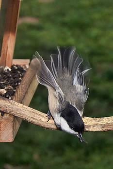 Leda Robertson - Flowing Feathers