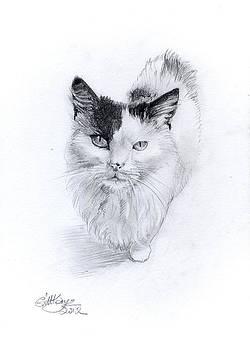 Fluffy by Gill Kaye