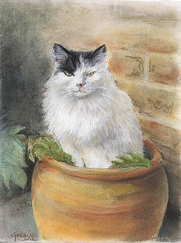 Fluffy in pot by Gill Kaye