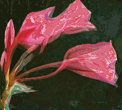 Fluted Lily Detail by David Klaboe