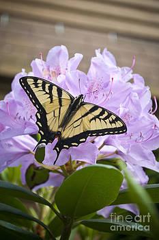 Flutter 1 by L W
