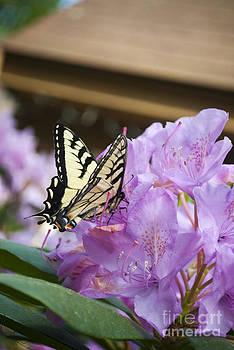 Flutter 2 by L W