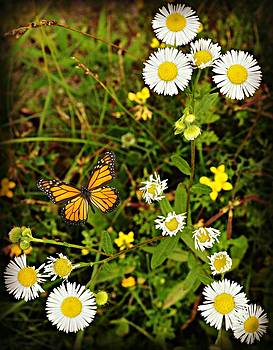 Flutter Bye Daisies by Jessica Grandall